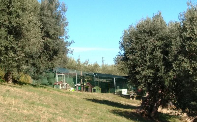 L'oasi felina nel Parco della Madonnina